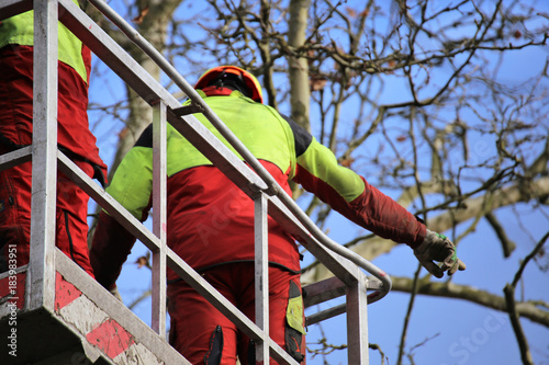 Baumpflege  Baumschnitt, Baumpflege