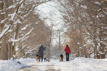 Women with dogs walk through the snow after the first lake-effect snowfall of the season at Knox Farm State Park in the Buffalo suburb of East Aurora