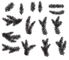 Collection Set of Realistic Fir Branches Silhouette for Christmas Tree, Pine. Vector Illustration