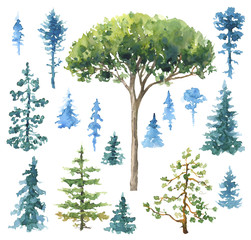 Set of Watercolor Conifers