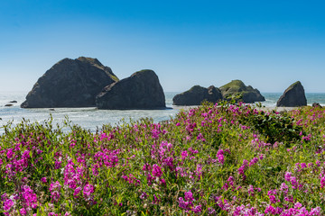 Printed roller blinds Sea Flowers Bloom Above Meyers Beach On Oregon Coast
