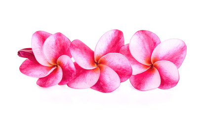 frangipani (plumeria) on white background