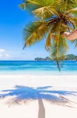 ombre de cocotier sur plage de Mahé, Seychelles