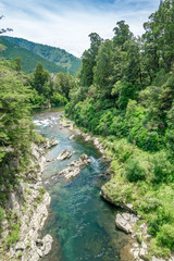 Beautiful green and clear pelorus river, known from the movie hobit. South Island, New Zealand
