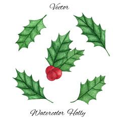 Hand painted christmas holly ilex aquifolium set isolated on the