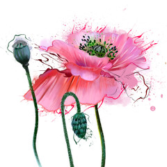 Beautiful poppies in soft watercolor tones, close-up, with smudges of paint