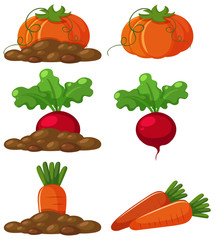 Different types of vegetables in the ground