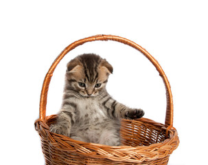 Kitten in a wooden basket on white background