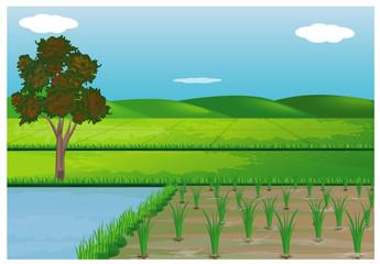 paddy field vector design