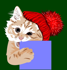 kitten, in a knitted red hat with a pompon