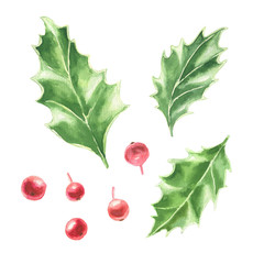 Watercolor hand drawn Christmas clip-art, holly green leaves and red berries, isolated on white background. Winter holidays festive botanical illustration.