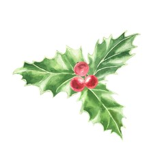 Watercolor hand drawn Christmas bouquet, holly green leaves and red berries, isolated on white background. Winter holidays festive illustration.