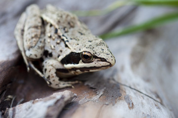 macro photo of a small frog in nature
