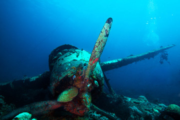 "Japanese ""Jake"" sea plane, shot down during World War II, sits on a coral reef."