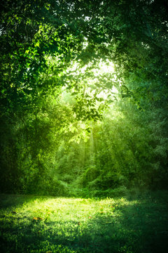 Beautiful landscape with sunlight shining through green trees and grass