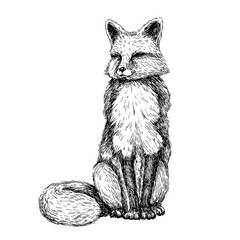 Sketch line art drawing of fox. Black and white vector illustration. Cute hand drawn animal.