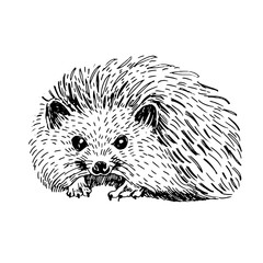 Sketch line art drawing of hedgehog. Black and white vector illustration. Cute hand drawn animal.