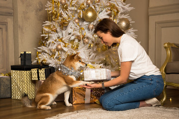 he girl gives the dog a New Year gift /Cute dog giving paw to a young brunette girl, christmas tree on background /surprise for a dog for the New Year