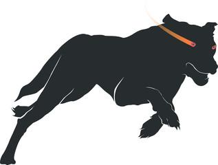 走る犬のシルエット