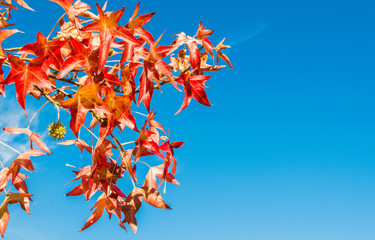 close up of  a tree branch with colorful autumn leaves under a blue sky
