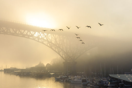 A golden foggy morning over Lake Union with houseboats, bridge and birds
