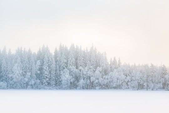 Fog in a winter forest landscape with snow and frost