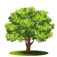 detached tree with green leaves