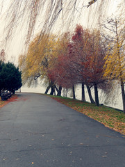 Empty alleys in Herastrau Park, Bucharest, Romania, on a cold, rainy day at the end of autumn