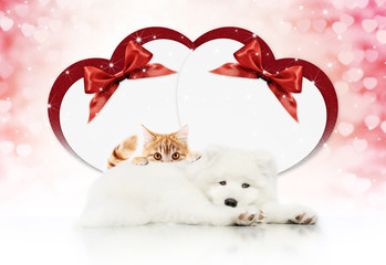 Fotomurales - valentine gift card or pets store signboard with cat and dog together heart shape and red ribbon bow on christmas lights background blank template and copy space