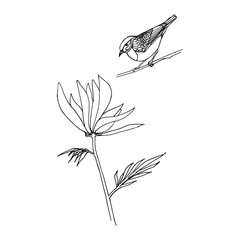 Outline of flower and bird. Hand drawn vector. Sketch or doodle style vector illustration of a plant.