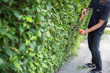 Man pruning tree.