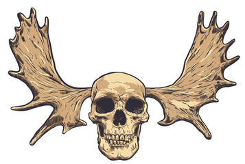 Hand drawn skull with deer horns on background. Vector