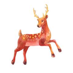 Little Deer. Watercolor illustration