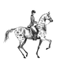 Horseback rider man and dapple grey horse. Black and white monochrome watercolor or ink hand drawing illustration. Horseman on stallion. England equestrian sport traditional hunting style.