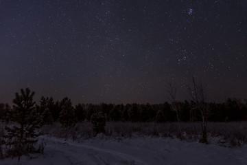 star forest sky spruce snow