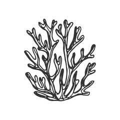 seaweed hand drawing vector sketch isolated