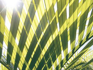 Green palm leaf transparent silhouette on sun. Palm leaf closeup.