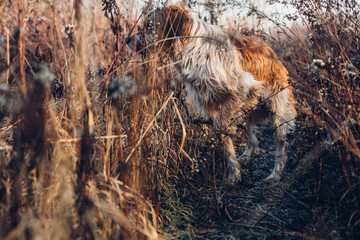 Dog in the autumn forest