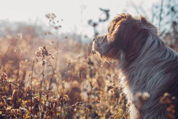 Dog in closeup