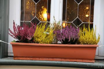 Erica / Erica is a genus of roughly 860 species of flowering plants in the family Ericaceae.