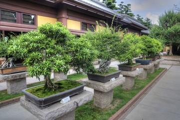 Bonsai Trees in Nan Lian Garden, Hong Kong.
