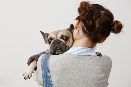 Close up cute french bulldog looking on camera lying on shoulder of her female owner. Picture from back of female veterinarian pressing sad puppy to her while doing tests. Relation, responsibility