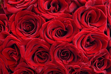 Natural floral background of large, red roses
