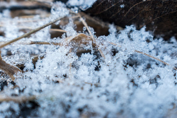 winter frost macro with leaf and pinestraw