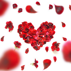 Heart made of rose petals. Red rose petals heart over white background. Top view with copy space for your text. Love and romantic theme