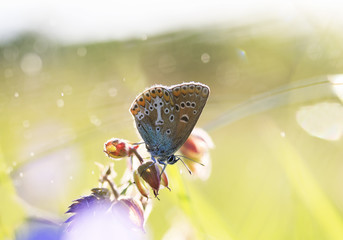 a small blue butterfly sits on a flower amid the bright grass in Sunny summer meadow
