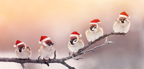 Wall Mural - five cute little birdies sitting in a fun Christmas hats on a branch in winter, Sunny garden