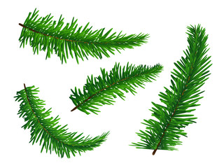 Set of green lush spruce branches. Symbol of Christmas and New Year isolated on white background. Vector illustration. Realistic style