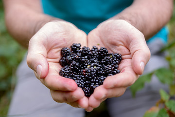 Man holds blackberries in the palms of his hands