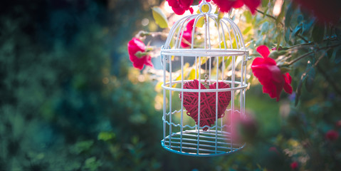 Heart inside the bird cage at the blooming garden, among red roses. Vintage Valentine's day background. Love/romance concept. Wedding invitation card.